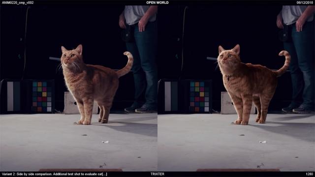 Cat VFX scene