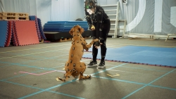 All the dog mocap and photogrammetry you can handle