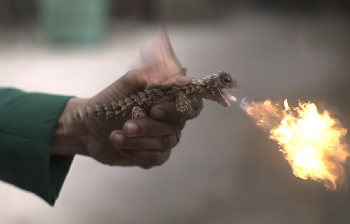 Shotmakers: How to put on a concert…for dragons