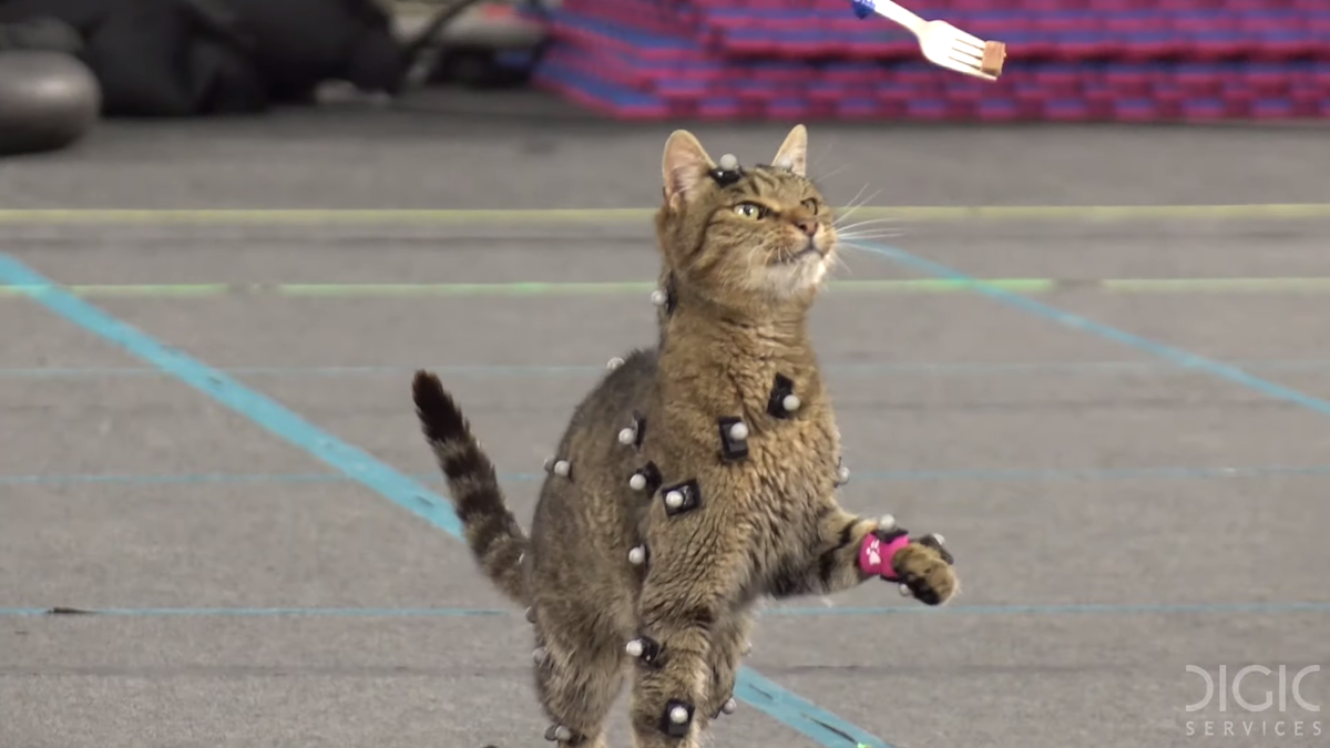 Motion capturing cats. That's it. That's the post.