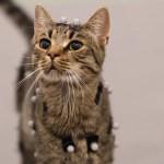 DIGIC Services showcases animal mocap in this video